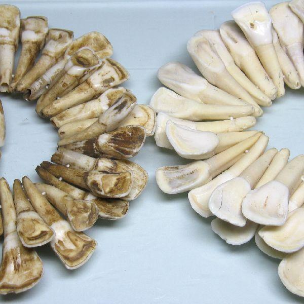インドネシアの水牛の歯で作られた大粒のボーンビーズです。