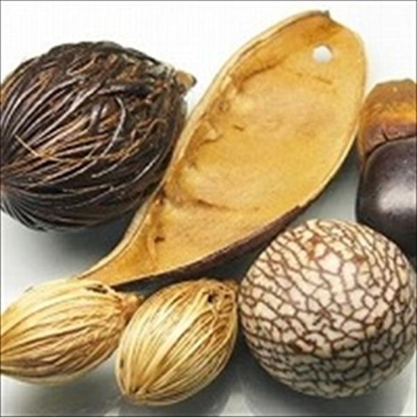 木の実・豆チャーム。大きな木の実が大胆に使われたドアノブ飾りのパーツです。