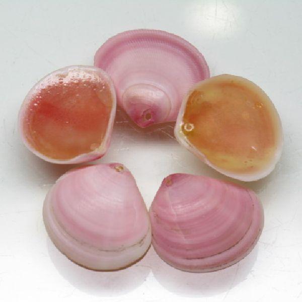桜貝(さくらがい)のチャームです。裏面にはピンク色が樹脂が充填されています。二枚貝ですので左右非対称ですから貝の合わせ部分が左にあるものを便宜的に(L)、右にあるものを(R)と表示しました。ピンク色の濃いものや薄紅色のものまで様々ですがお好みに応じて桜貝の色と質感の輝きをお楽しみください。(この商品は手作りジュエリー・アクセサリーパーツとして販売しています)